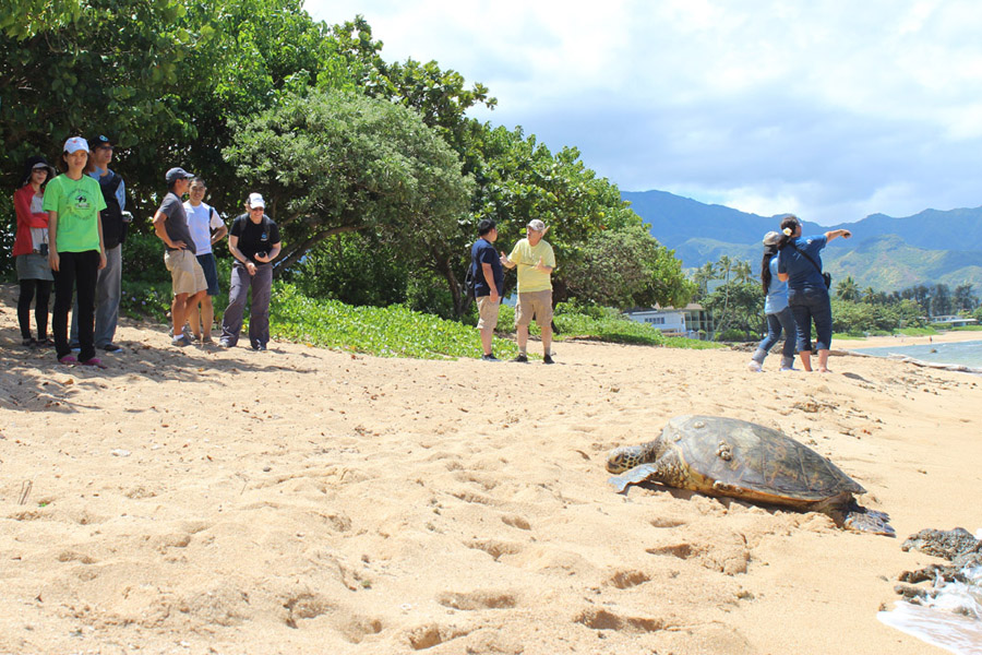 Adopt sea turtle in Hawaii