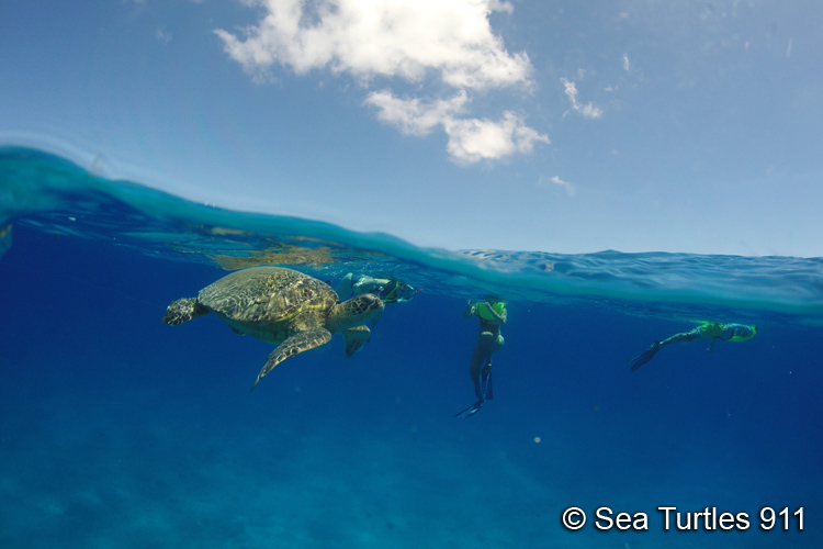 Ocean ecotourism to snorkel with sea turtle