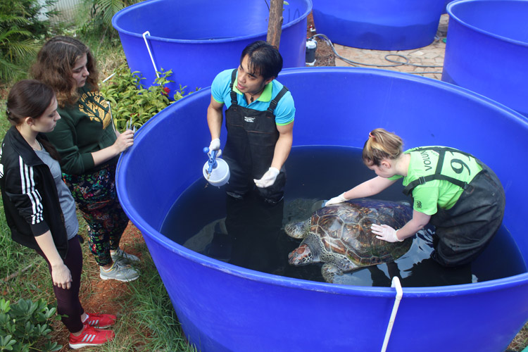 Student interns being trained in sea turtle research