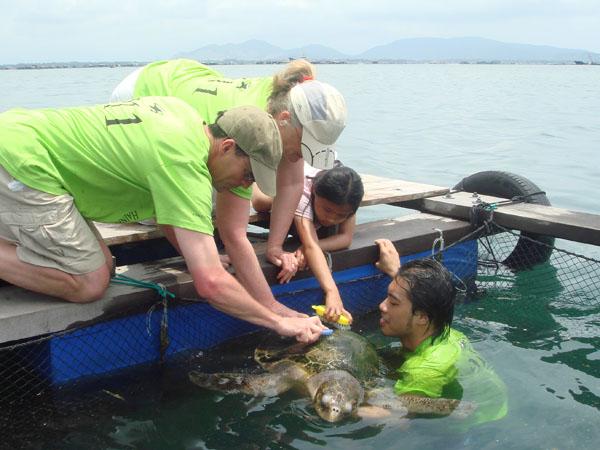 Family tourist volunteer to help sea turtle
