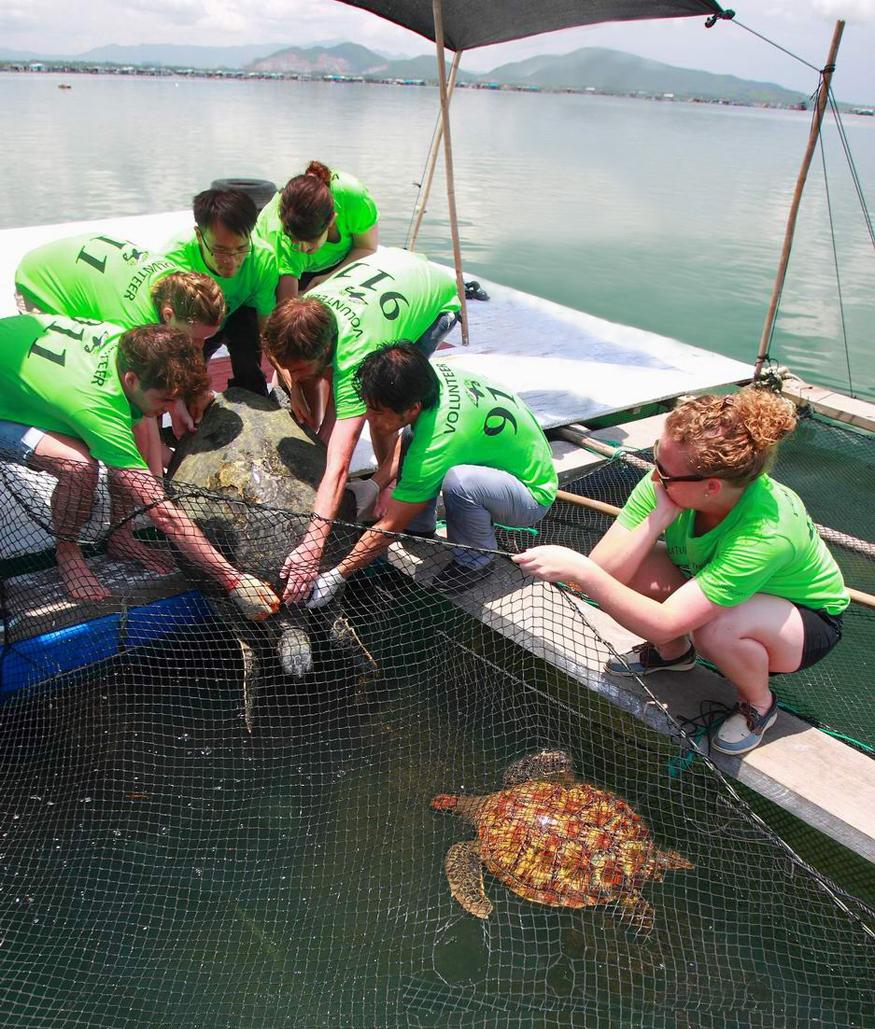 Floating sea turtles 911 hospital