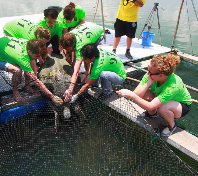 Group releases adult sea turtle