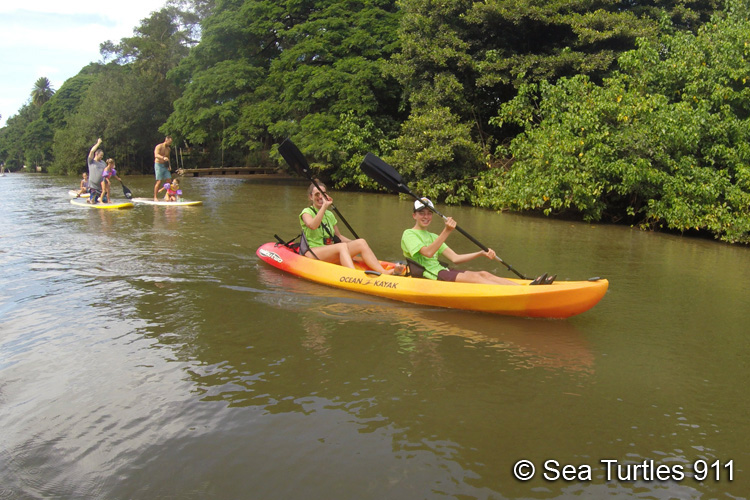 Kayaking in river to watch turtles in Hawaii