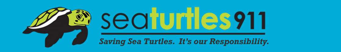 Sea Turtles 911
