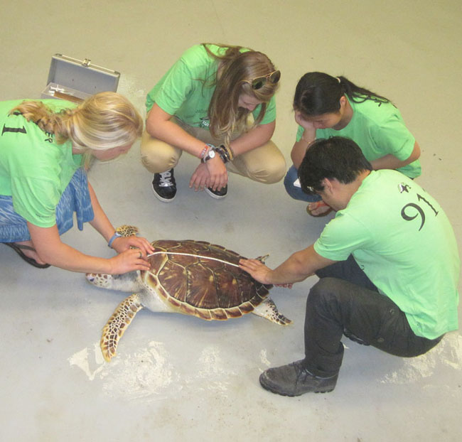 Sea turtle conservation research