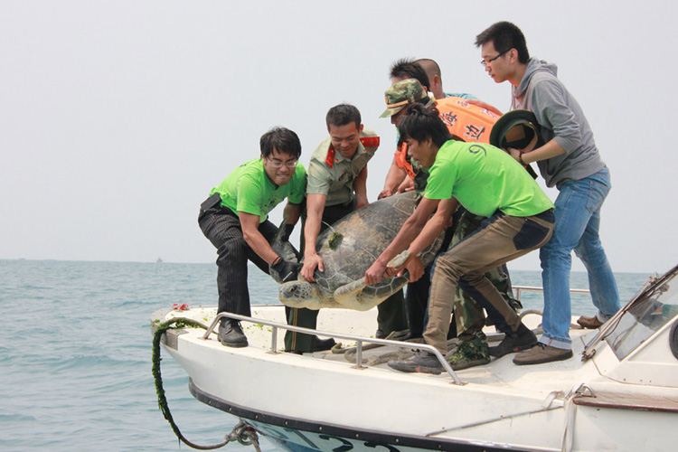 Releasing satellite tagged turtle from police boat