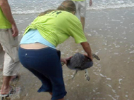 Volunteers releasing rehabilitated sea turtle