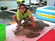 Intern with rescued sea turtle