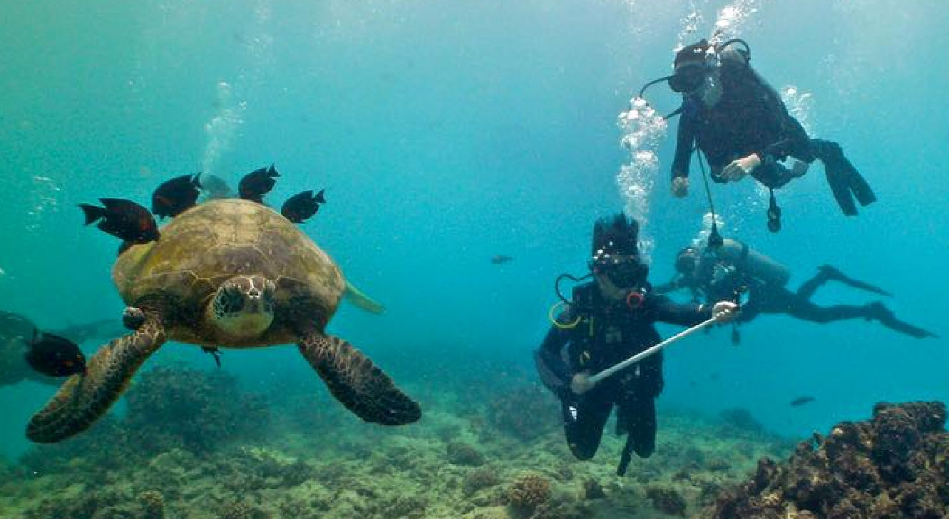 Student interns scuba diving to observe sea turtle behavior