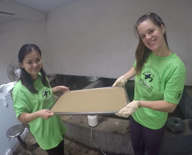 Student interns make sea turtle gelatin food