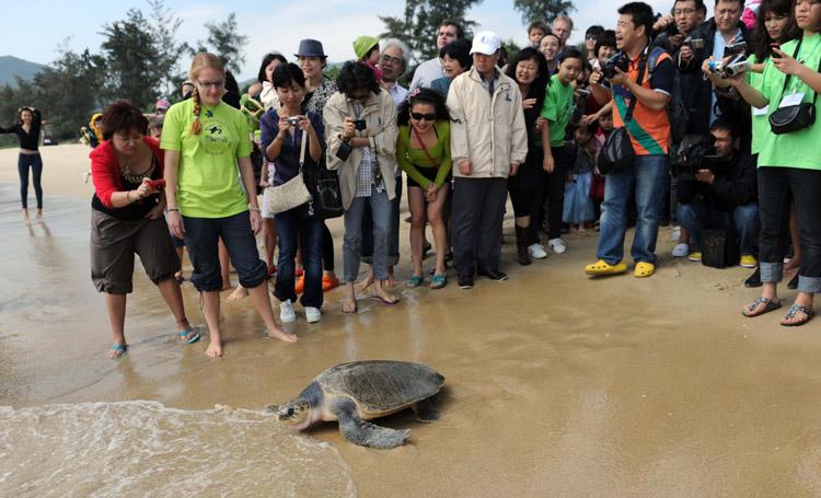 Student intern releases sea turtle