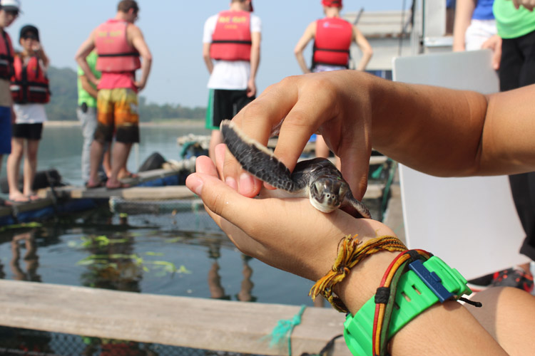 Student holding sea turtle hatchling