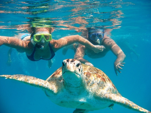 Students snorkeling with sea turtles