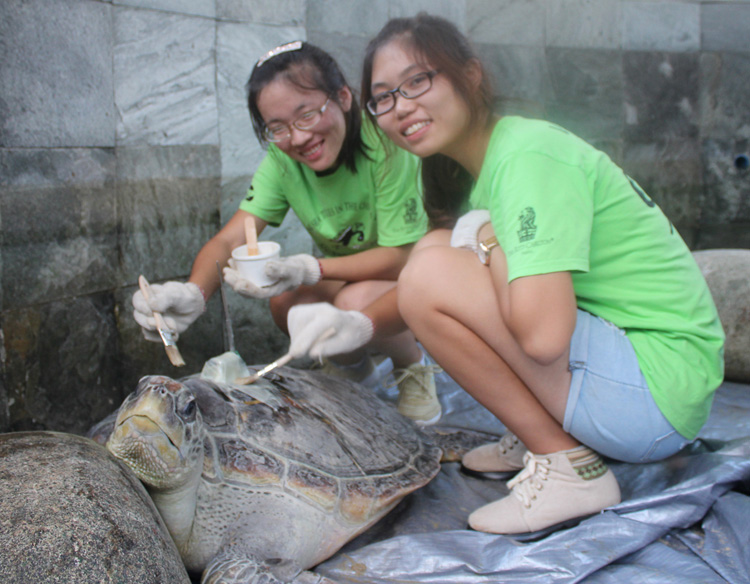 Students attaching satellite tag to sea turtle