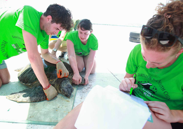 Students collect sea turtle data