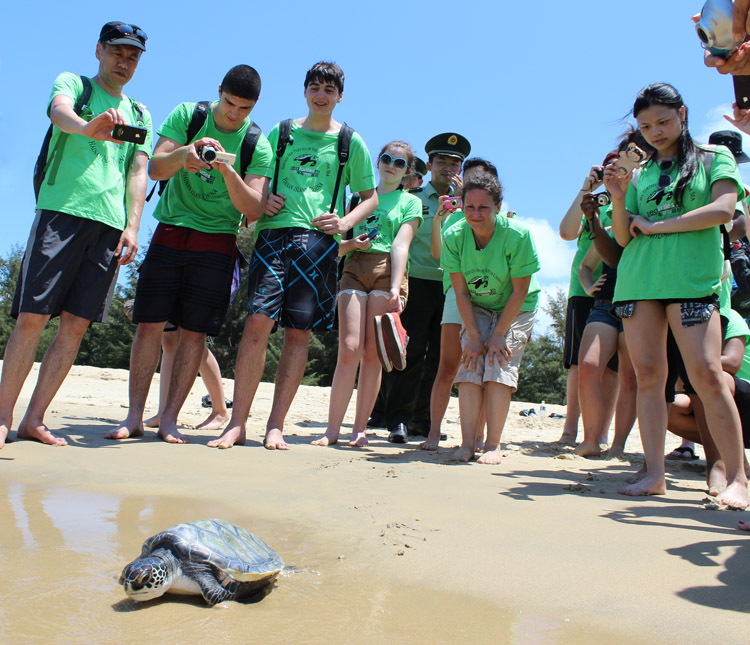 Students release sea turtle