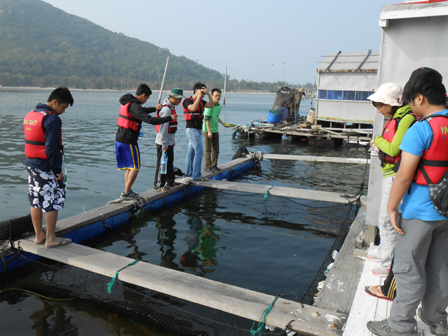 Students at floating sea turtle hospital enclosures
