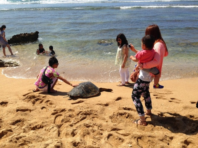Tourists touch turtles in Hawaii