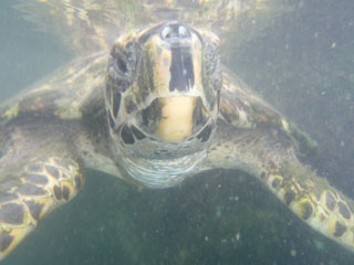 Sea Turtle Patient