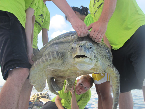 Intern assessing health of sea turtle