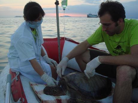 Intern and veterinarian rescue sea turtle