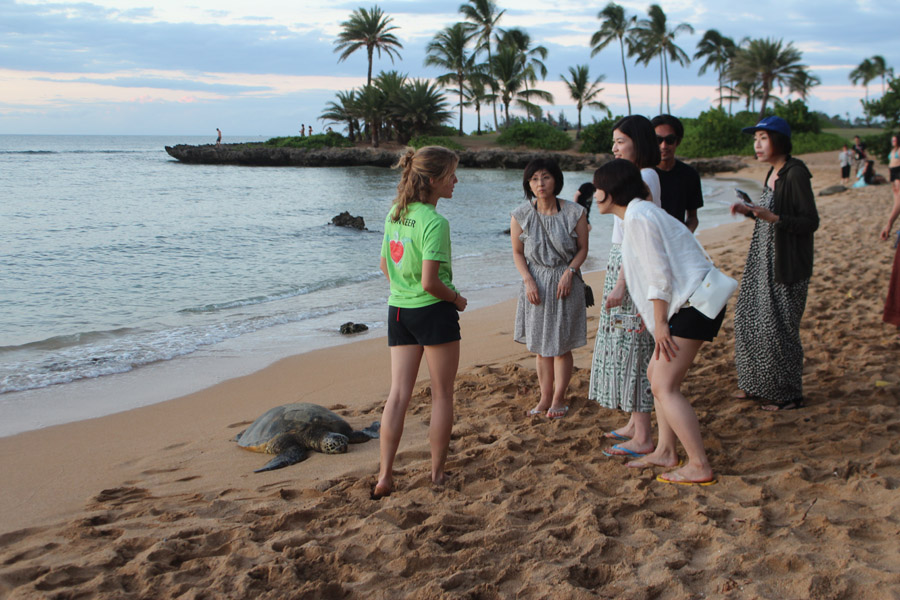 Volunteer educates tourists during sea turtle eco tourism