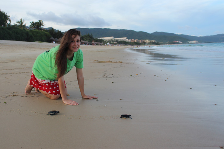 Baby sea turtle hatchlings being released by volunteers