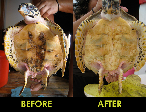 Sea Turtle Patients: Sick and Injured Turtles at the Hospital